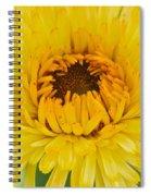 Yellow Zinnia 9494 4286 Spiral Notebook