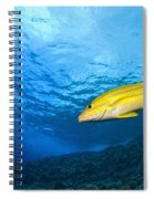 Yellowtail Snapper, Molokini Crater Spiral Notebook