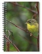 Yellowthroated Warbler Spiral Notebook