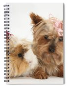 Yorkshire Terrier And Guinea Pig Spiral Notebook