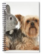 Yorkshire Terrier And Young Silver Spiral Notebook