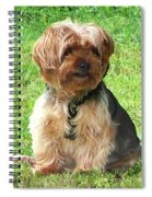 Yorkshire Terrier In Park Spiral Notebook