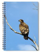 Young Bald Eagle Spiral Notebook
