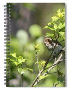 Young Blue Grosbeak Spiral Notebook
