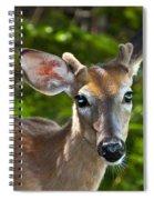 Young Buck 2 Spiral Notebook