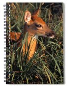 Young Deer Laying In Grass Spiral Notebook