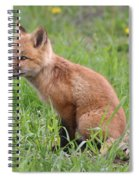 Young Fox Among The Dandelions Spiral Notebook