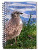 Young Gull Spiral Notebook