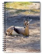 Young Ibex Spiral Notebook