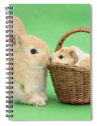 Young Rabbit With Baby Guinea Pig Spiral Notebook
