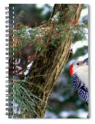 Young Red-bellied Woodpecker Spiral Notebook