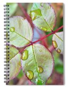 Young Rose Leaves Spiral Notebook