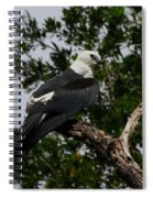 Young Swallow-tailed Kite Spiral Notebook