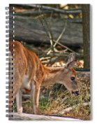 Young Whitetail Spiral Notebook