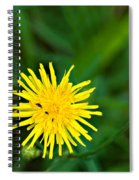 Yummy Yellow Spiral Notebook