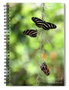 Zebra Butterflies Hanging Out Spiral Notebook
