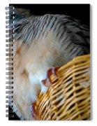 Zebra Dove From Above Spiral Notebook