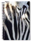 Zebra Face  Spiral Notebook