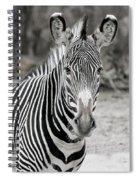 Zebra Spiral Notebook