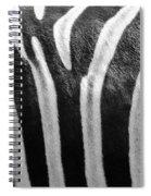 Zebra Print Spiral Notebook