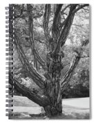 Zebra Tree Black And White Spiral Notebook