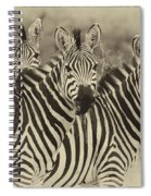Zebra Trio Spiral Notebook