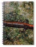 Zig-zag Salamander Spiral Notebook