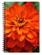 Zinnia Flare Spiral Notebook