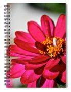 Zinnia Personality Spiral Notebook