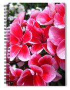 Zonal Geranium Named Candy Fantasy Kiss Spiral Notebook