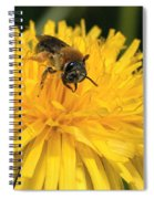A Bee In A Dandelion Spiral Notebook