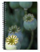 After The Flower 3 Spiral Notebook