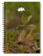 Arctic Starflower Spiral Notebook
