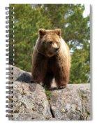 Brown Bear 4 Spiral Notebook
