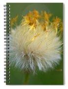 Coltsfoot B2 Spiral Notebook