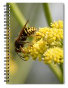 Common Wasp Spiral Notebook