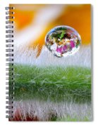 Drop Of Rain On The Pod Lupine Spiral Notebook