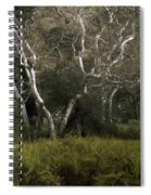 Dv Creek Trees Spiral Notebook
