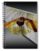 Eastern Amber Dragonfly 3d Spiral Notebook