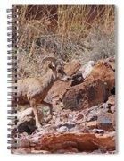 Escalante Canyon Desert Bighorn Sheep  Spiral Notebook