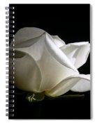 Evening Light White Rose Flower Spiral Notebook