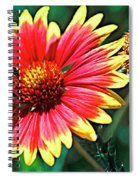 Firewheel Spiral Notebook