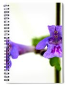 Ground-ivy Spiral Notebook