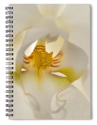 In The Heart Of The Orchid Spiral Notebook