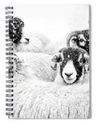 In Winters Grip Spiral Notebook