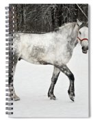 Light  Grey Horse Goes On A Winter Glade  Spiral Notebook