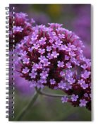Purpletop Vervain Spiral Notebook