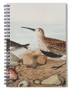 Red Backed Sandpiper Spiral Notebook