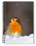 Robin In The Snow Spiral Notebook