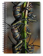 Romalea Microptera Hierarchy Spiral Notebook
